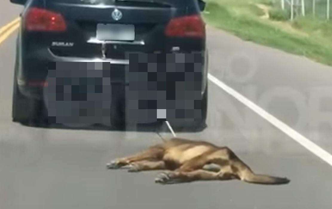 Dog dragged by car