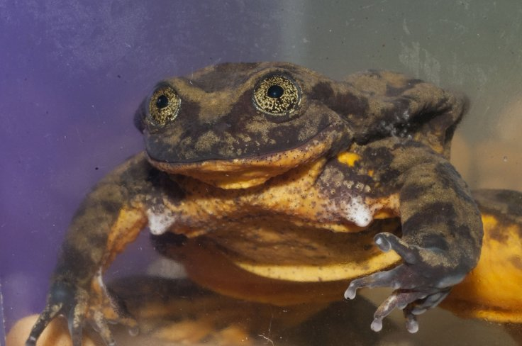 Romeo the frog is the last of his kind and needs your help finding his Juliet to save his species