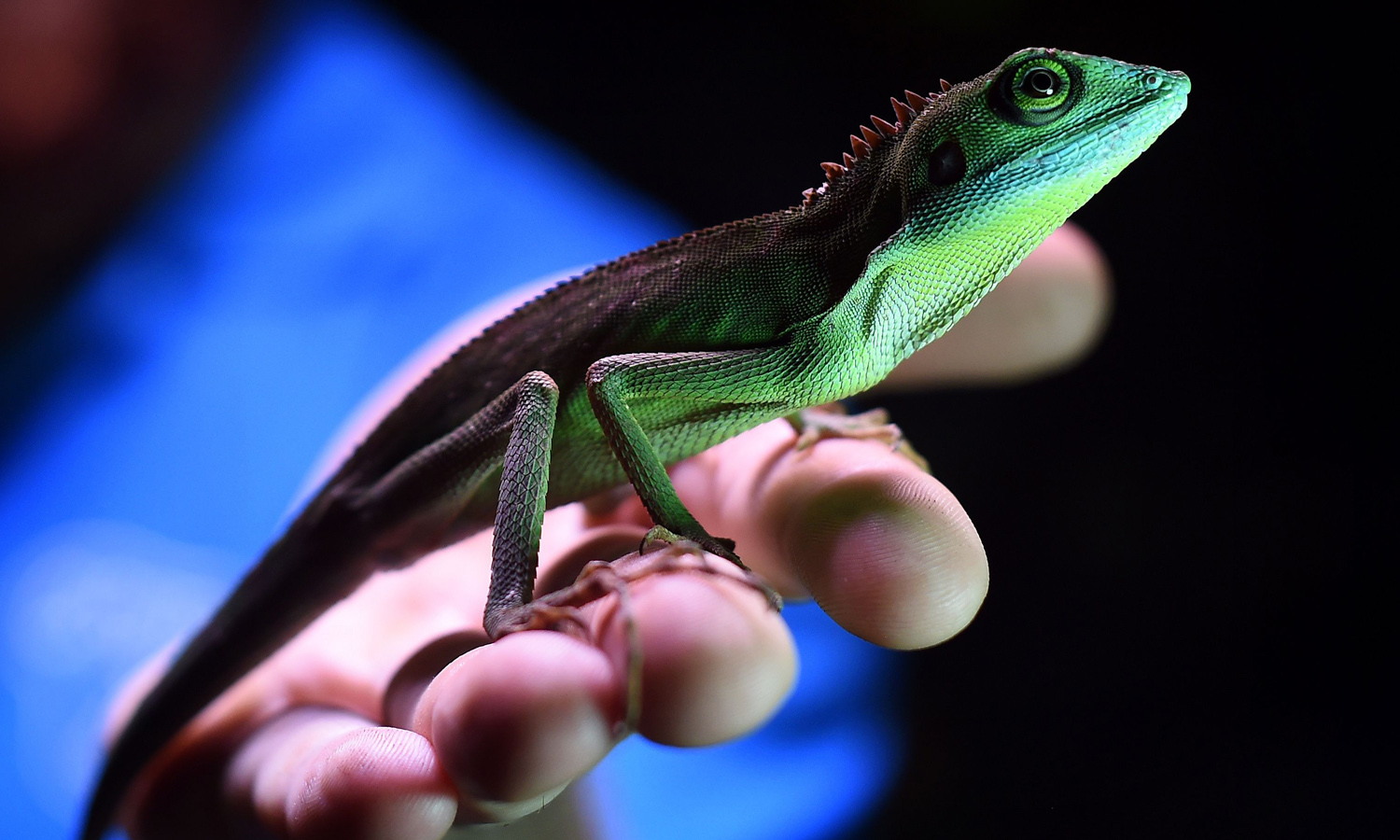 Iran accuses West of using lizards for nuclear spying
