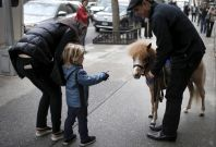 Jorge Garcia-Bengochea holds a therapy horse