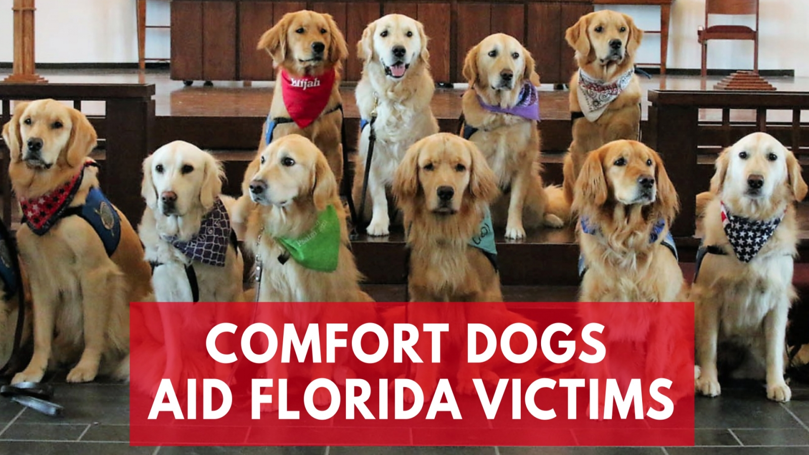comfort-dogs-flock-to-florida-to-offer-support-to-victims-of-parkland-high-school-shooting