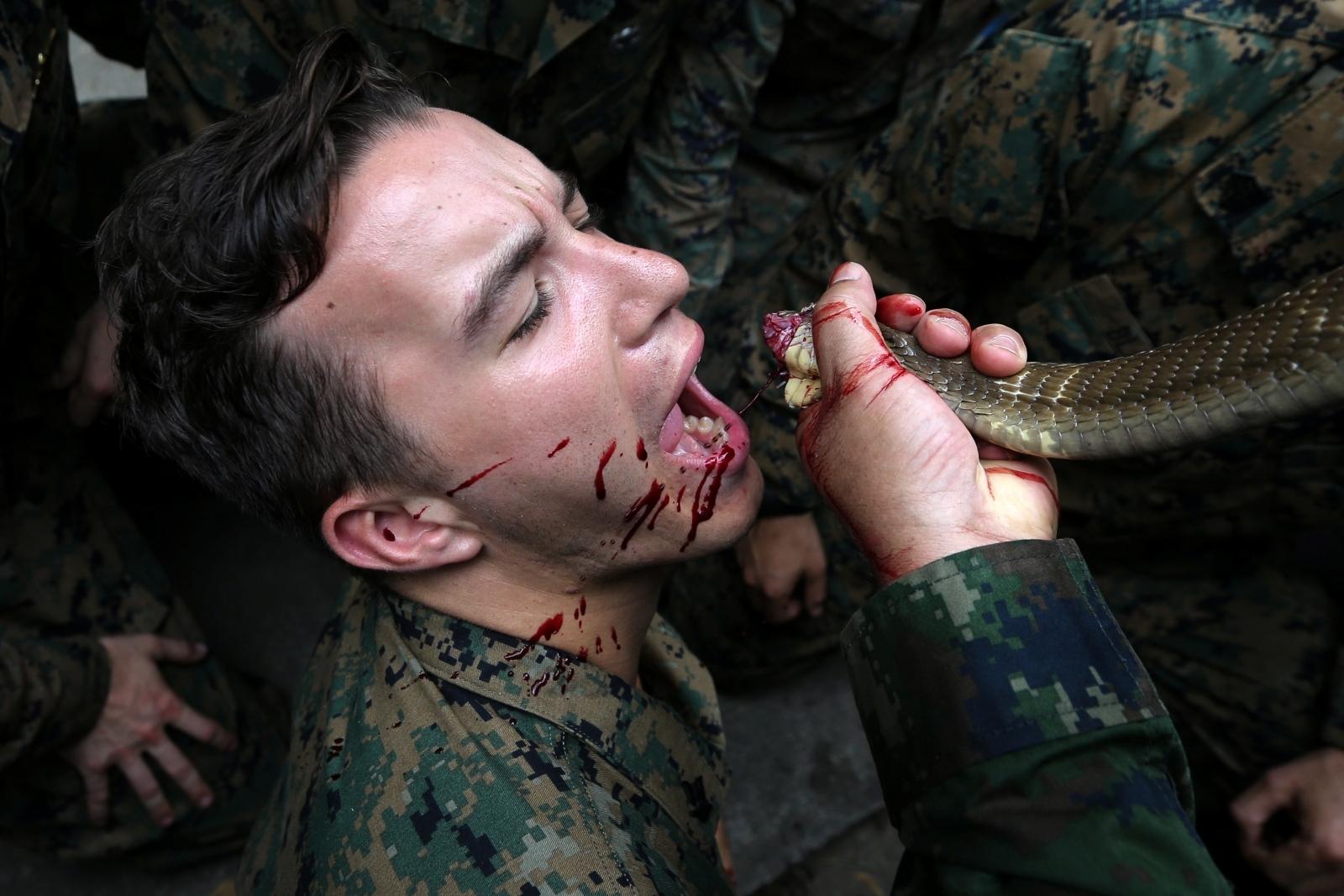 Cobra blood