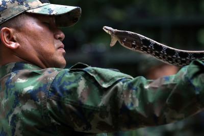 Snake catch