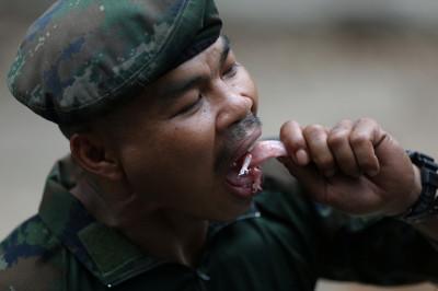 thai gecko eaten