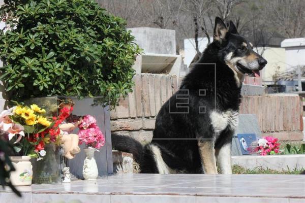 Dog at owner's grave