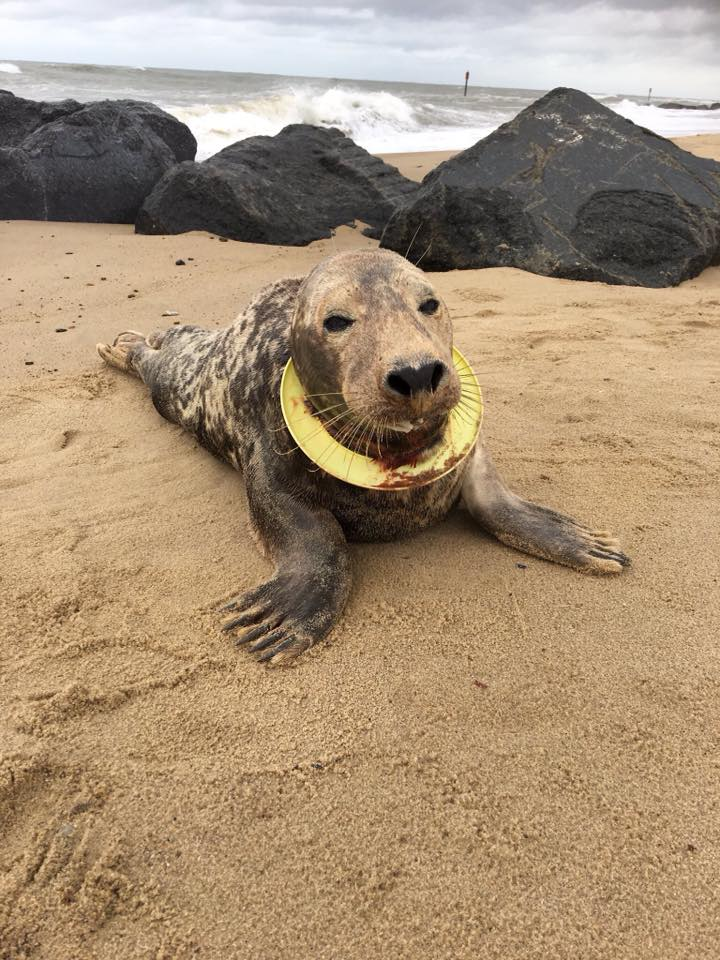 Frisbee the seal