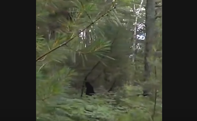 Bigfoot caught in mysterious footage? Hiker 'spots' Sasquatch in the deep woods