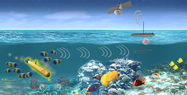 US military wants to recruit sea creatures