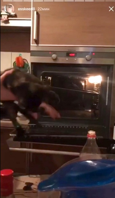 Russian students throw cat in oven