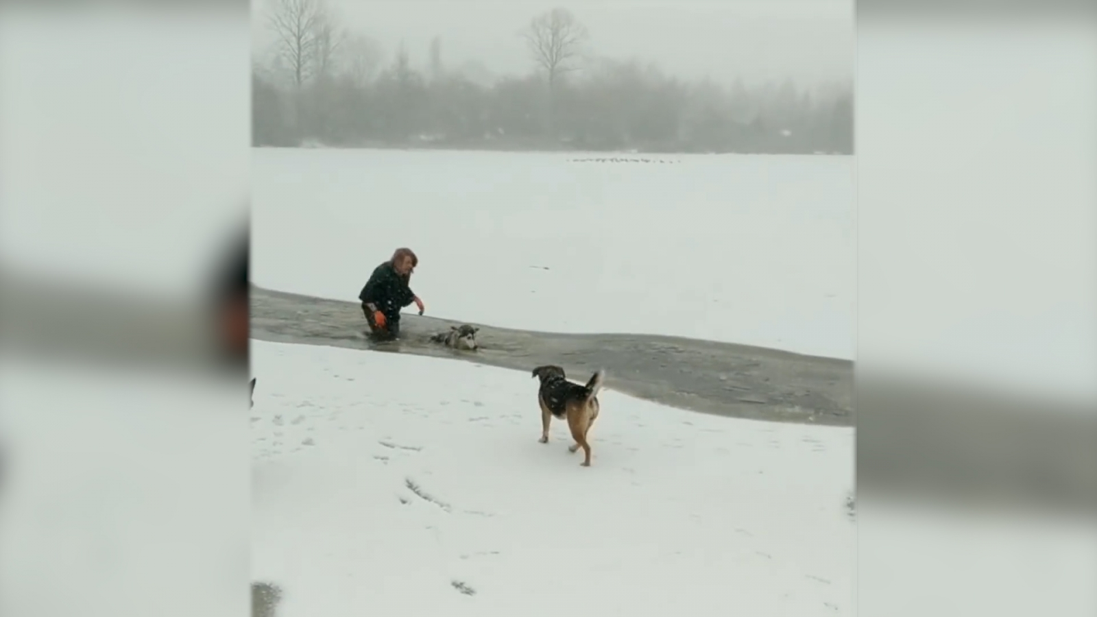 woman-wades-through-icy-waters-to-rescue-dog