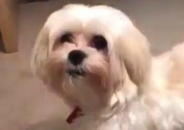 Viral dog