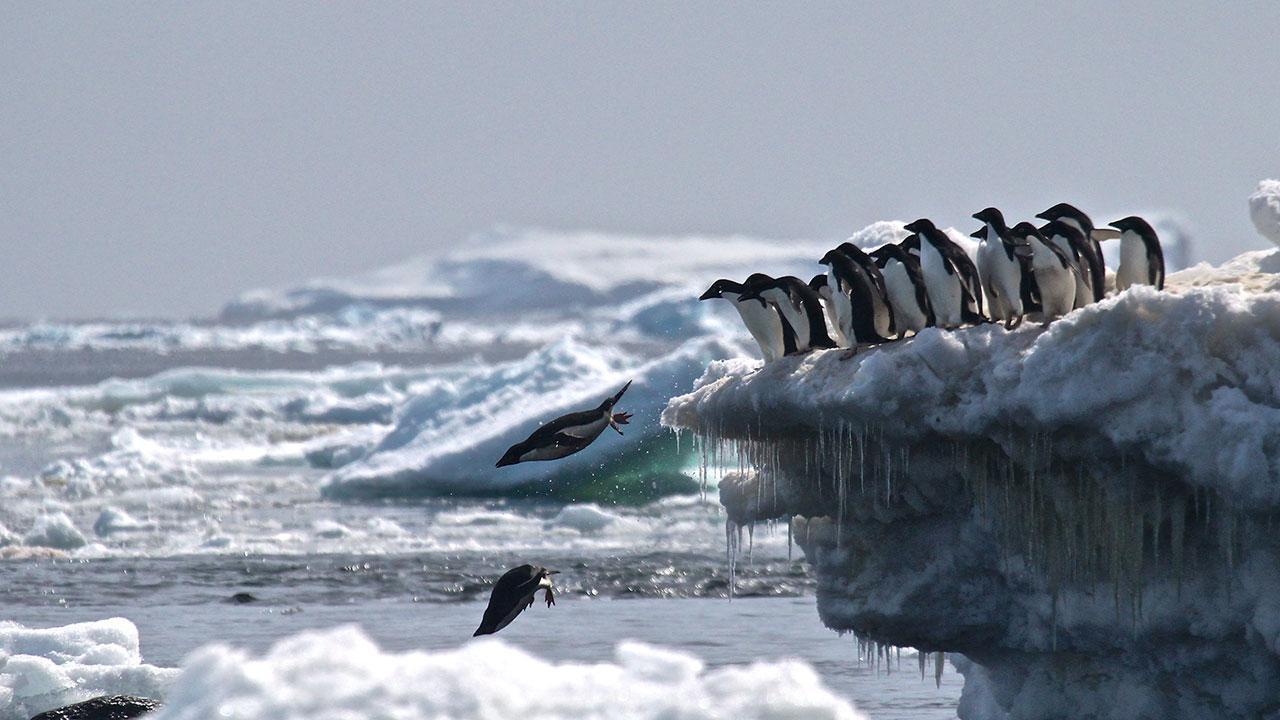 Penguin supercolony Antarctica