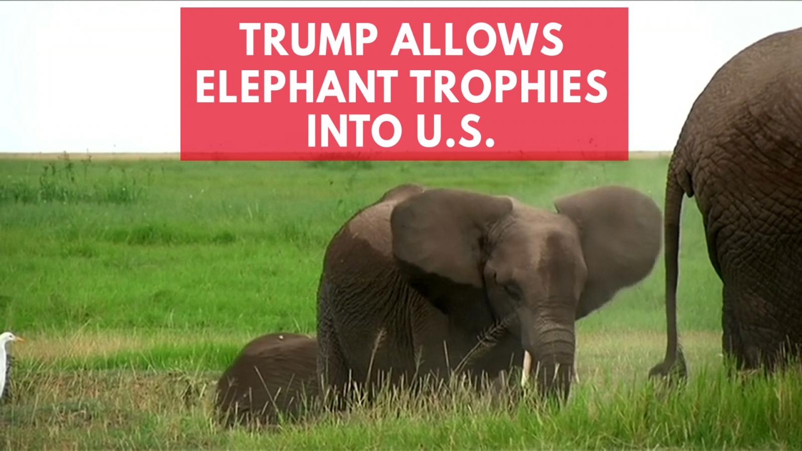 PETA releases footage of elephant killer to pressure passage of bill against trophy hunting