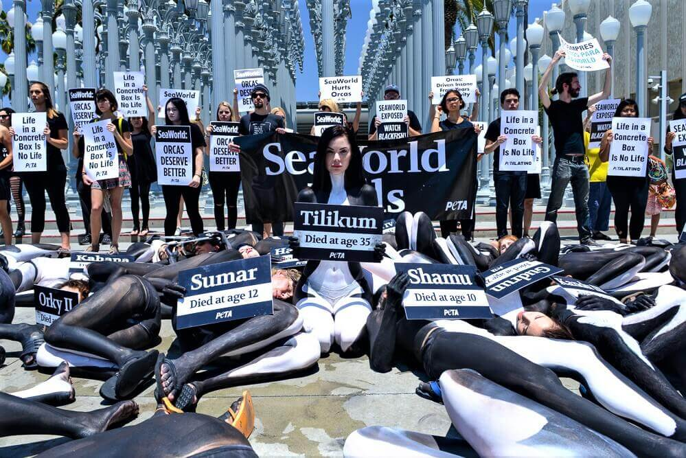 SEAWORLD PROTEST