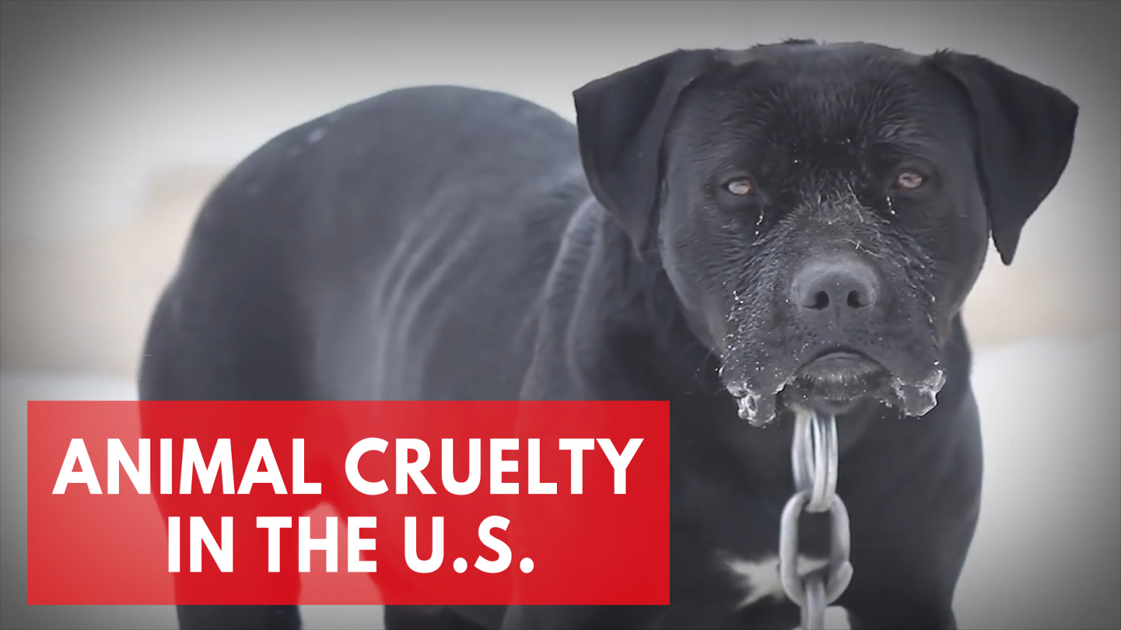 animal-cruelty-in-the-u-s-best-and-worst-states-for-animal-protection-laws