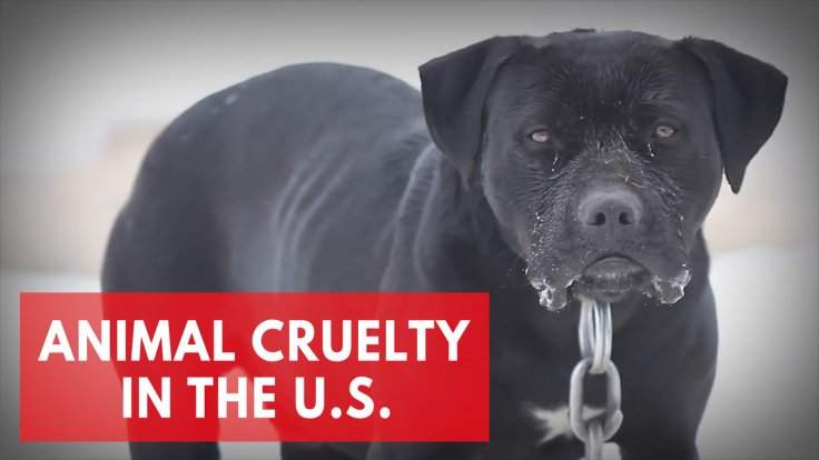 Animal cruelty in the United States: the best and worst states for animal protection laws.