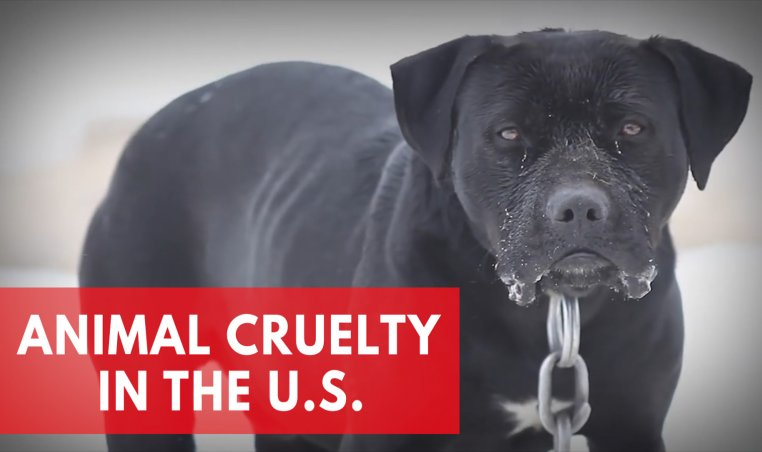 Animal Cruelty In the U.S.: Best And Worst States For Animal Protection Laws