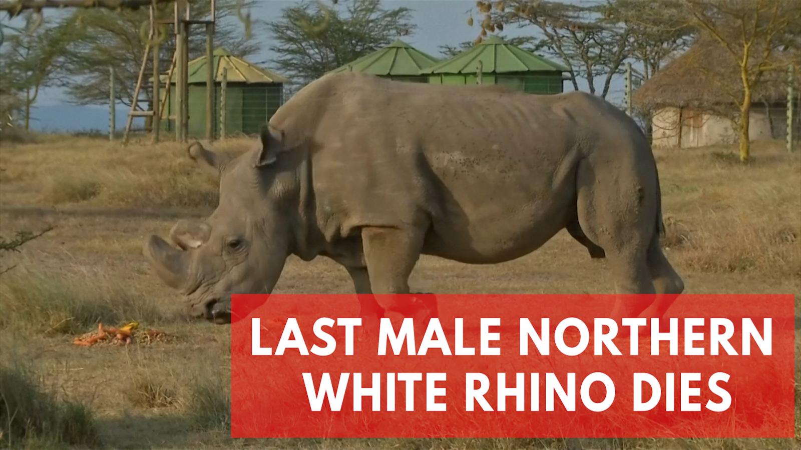 worlds-last-male-northern-white-rhino-dies