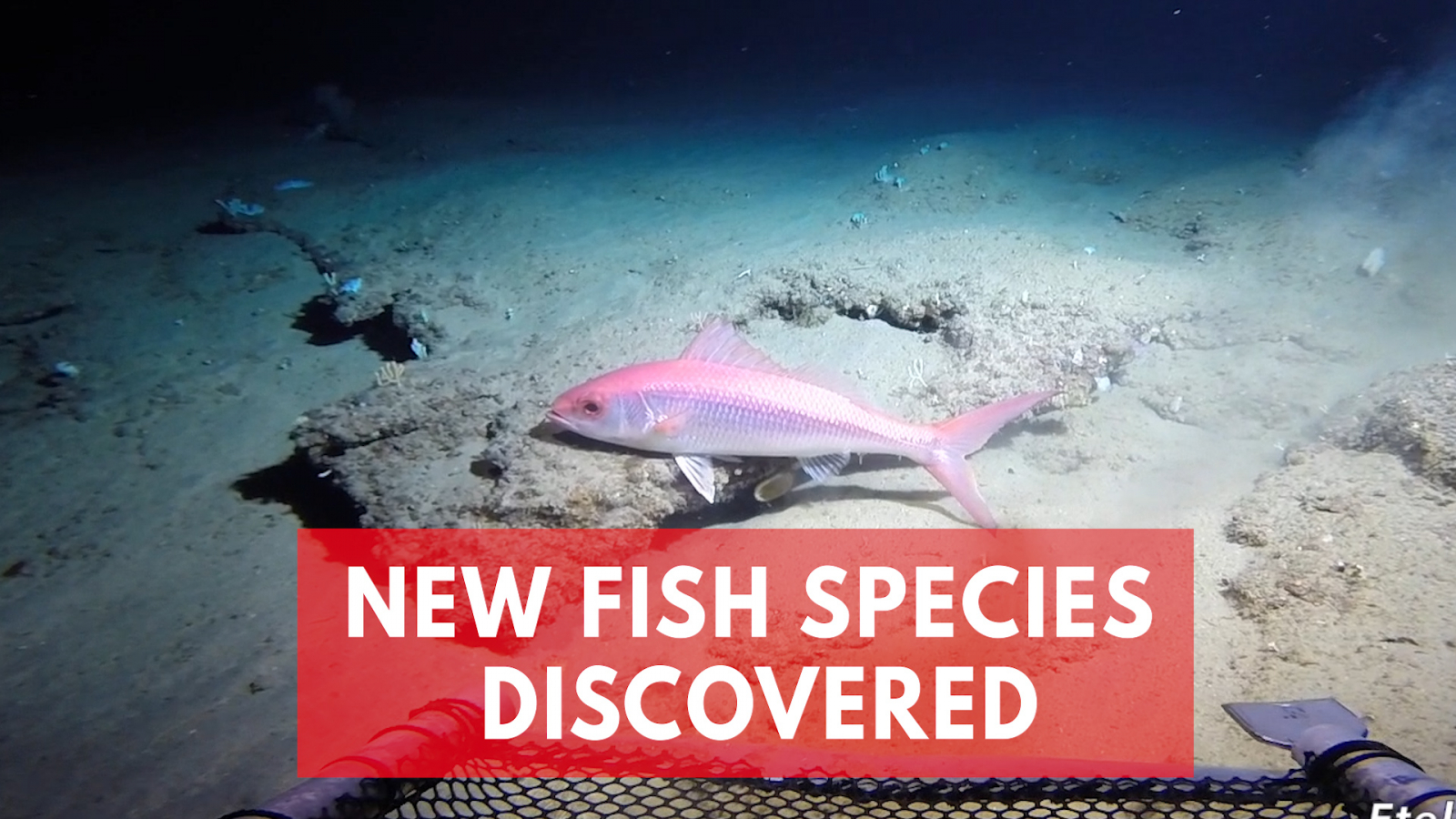 scientists-discover-a-hidden-ocean-twilight-zone-filled-with-unknown-fish