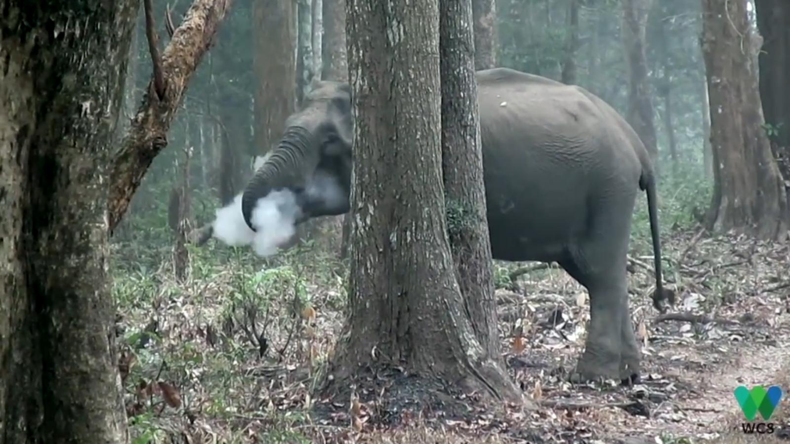 watch-smoke-breathing-elephant-stumps-scientists