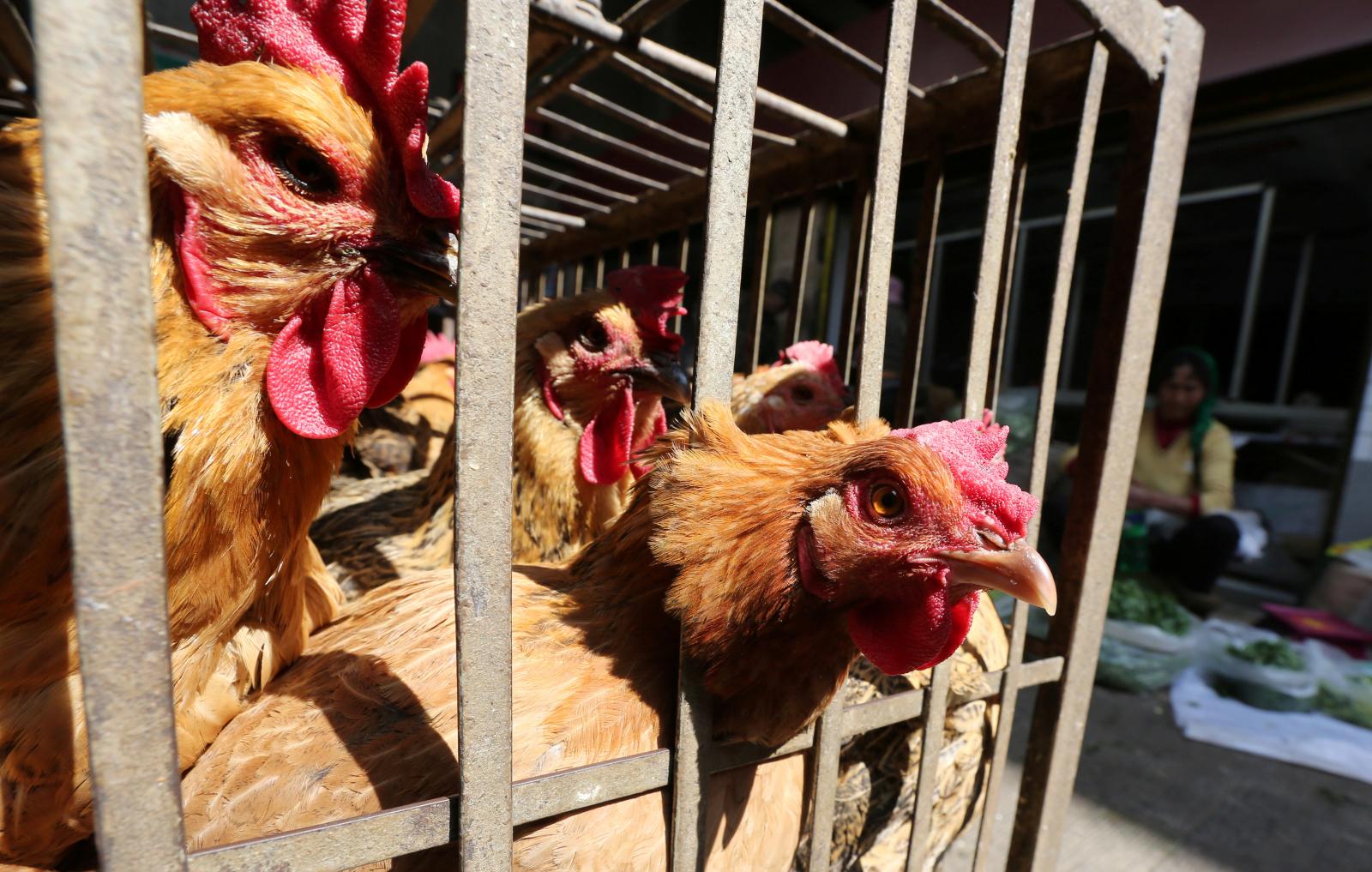 how to avoid bird flu