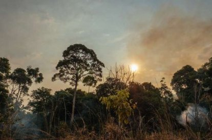 Amazon Forest fire