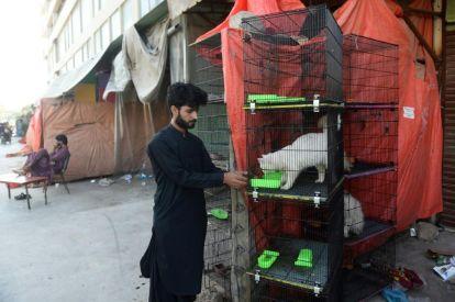 Pakistan Pet Shop