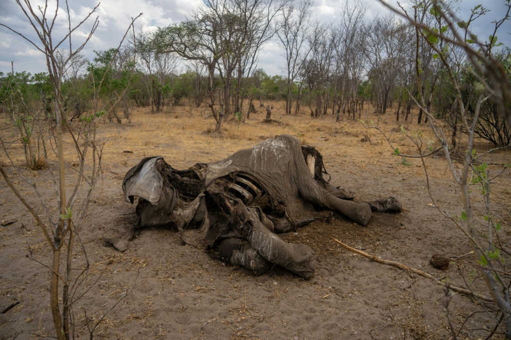 Hundreds of African elephants mysteriously found dead