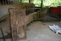 Cambodia's dog meat trade
