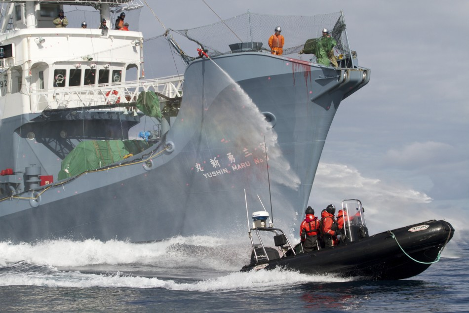 Activists Report Presence of Japanese Whaling Security Ship Inside Australian Waters