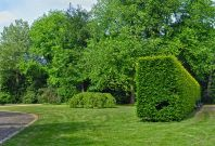 Green Space and the Heart