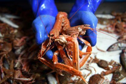 EU fresh seafood shipments