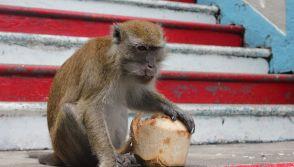 Monkey Forced Labor