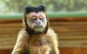 Elon Musk Monkey Implant