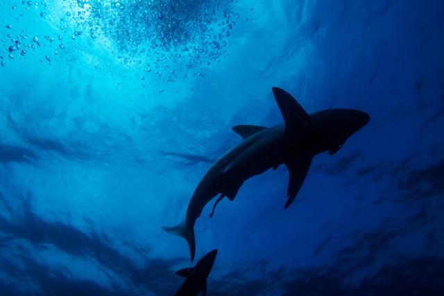 Glow-in-the-dark sharks in deep New Zealand waters surprise scientists