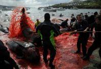 Faroe Islands dolphin slaughter