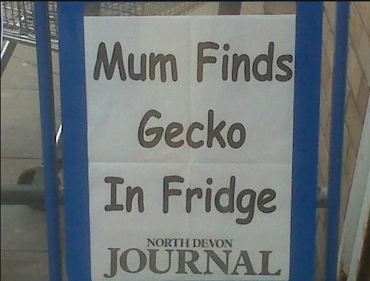 Mum Finds Gecko In Fridge