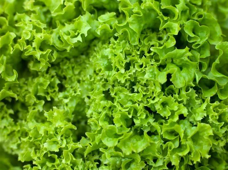 Two tons of illicit greens in lettuce shipment