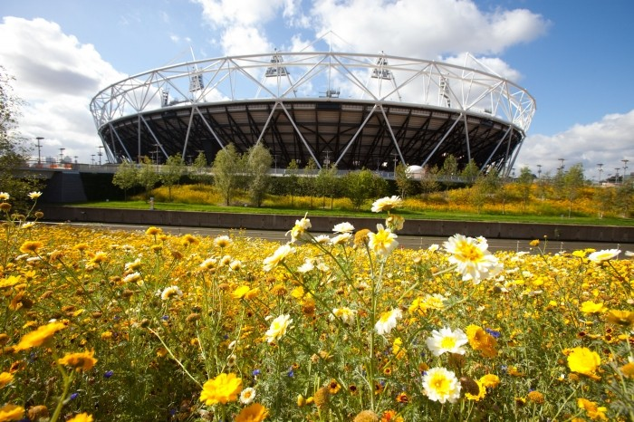 Flowers in bloom in the parkland039s area of the Olympic Park looking towards the Olympic Stadium Oct. 3,2011