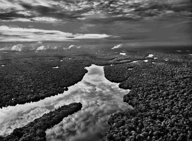 An exhibition in aid of Sky Rainforest Rescue, featuring photography from Sebastião Salgado and Per Anders Pettersson