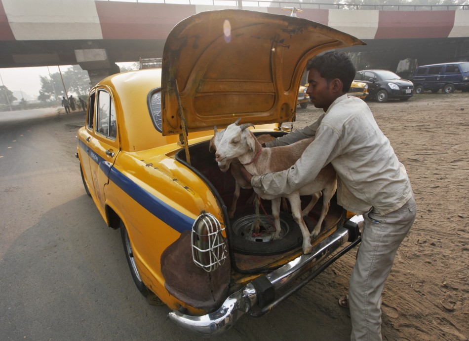 A man loads a pair of goats into the car boot after purchasing them from a livestock market in Kolkata