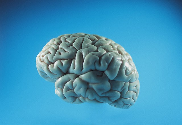 Protein may be key to Super Memory