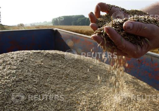 Fibre and whole grains reduce bowel cancer risk