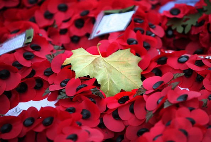 Armistice Poppies