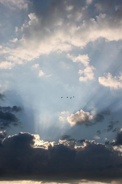 The Early Birds, by Scarlett Martin