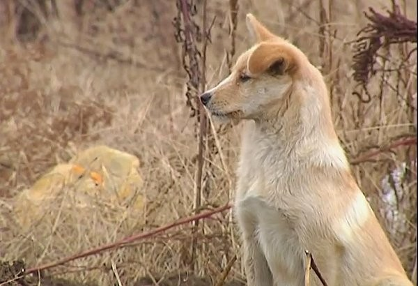 Loyal Dog in China remains at owner's grave