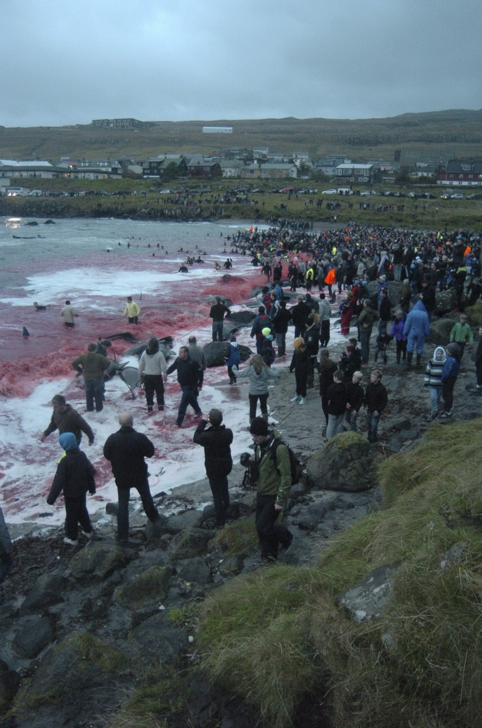 Inhabitants of the Faroe Islands have taken part in their traditional 'Grindadrap' – a gruesome hunt for pilot whales.