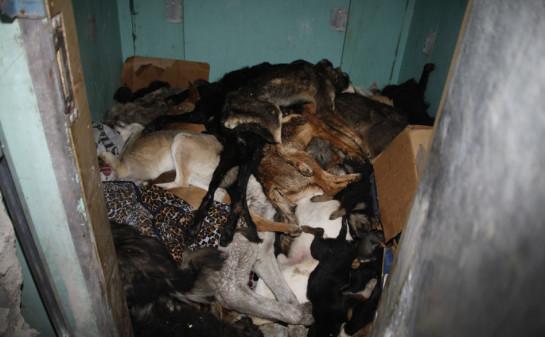 Lying doggo in Ukraine