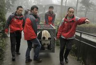 Staff transport panda Tian Tian in a cage at the Bifengxia panda breeding centre in Ya'an, Sichuan province