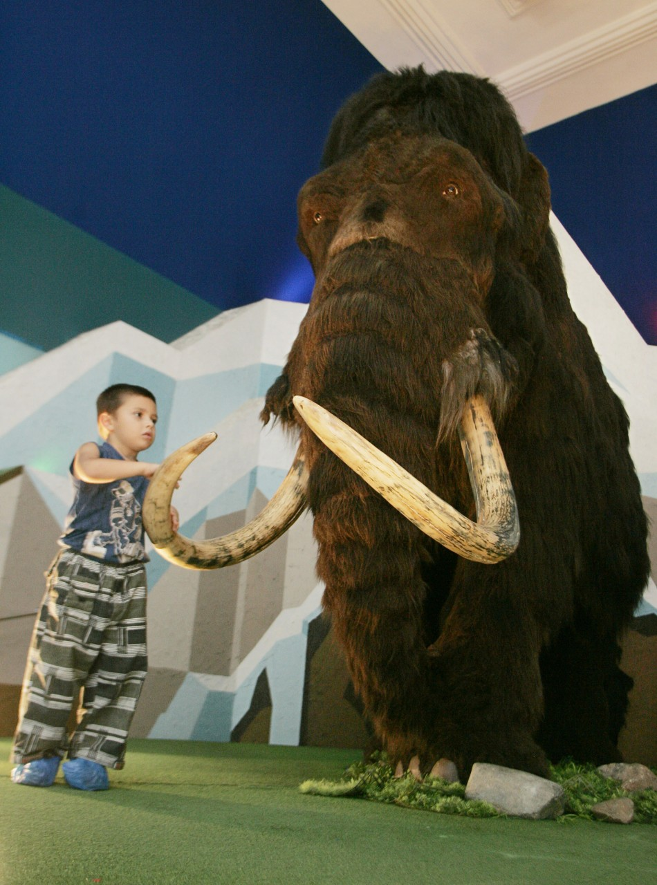 A mammoth reconstruction